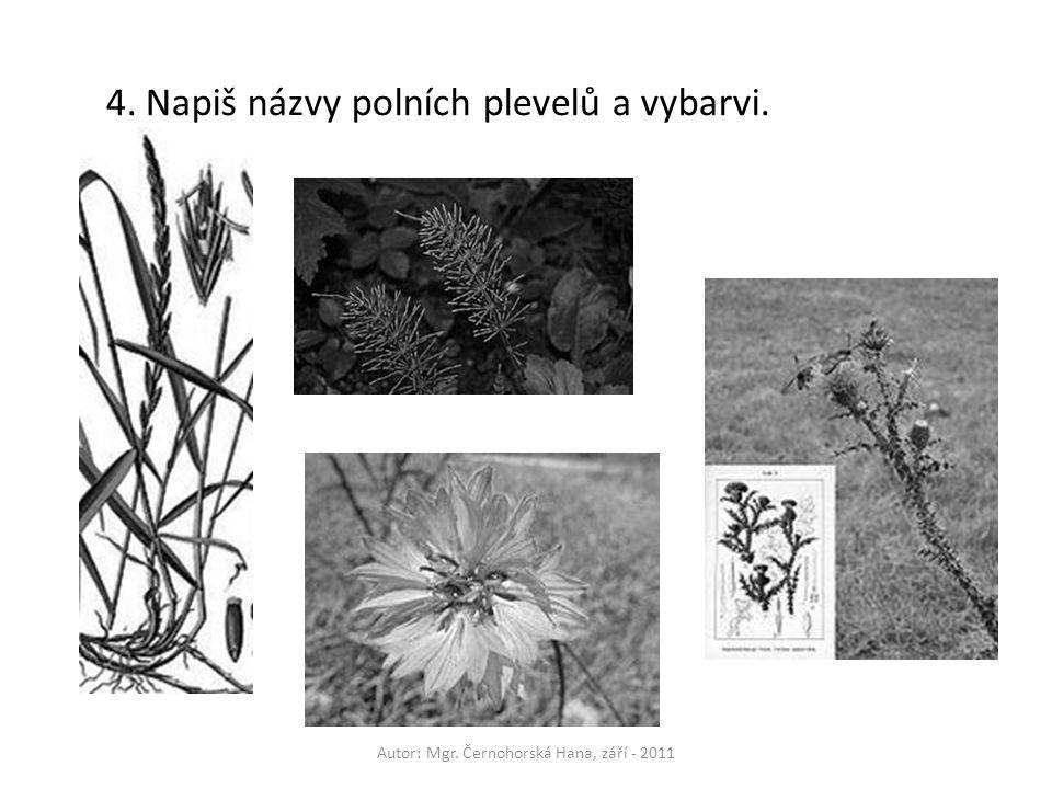 Autor: Mgr. Černohorská Hana, září - 2011 4.Napiš názvy polních plevelů a vybarvi.