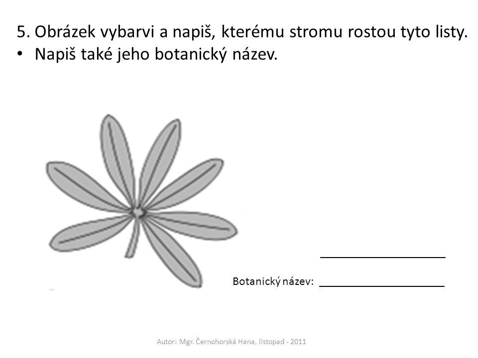 5.Obrázek vybarvi a napiš, kterému stromu rostou tyto listy. Napiš také jeho botanický název. _____________________ Botanický název: _________________
