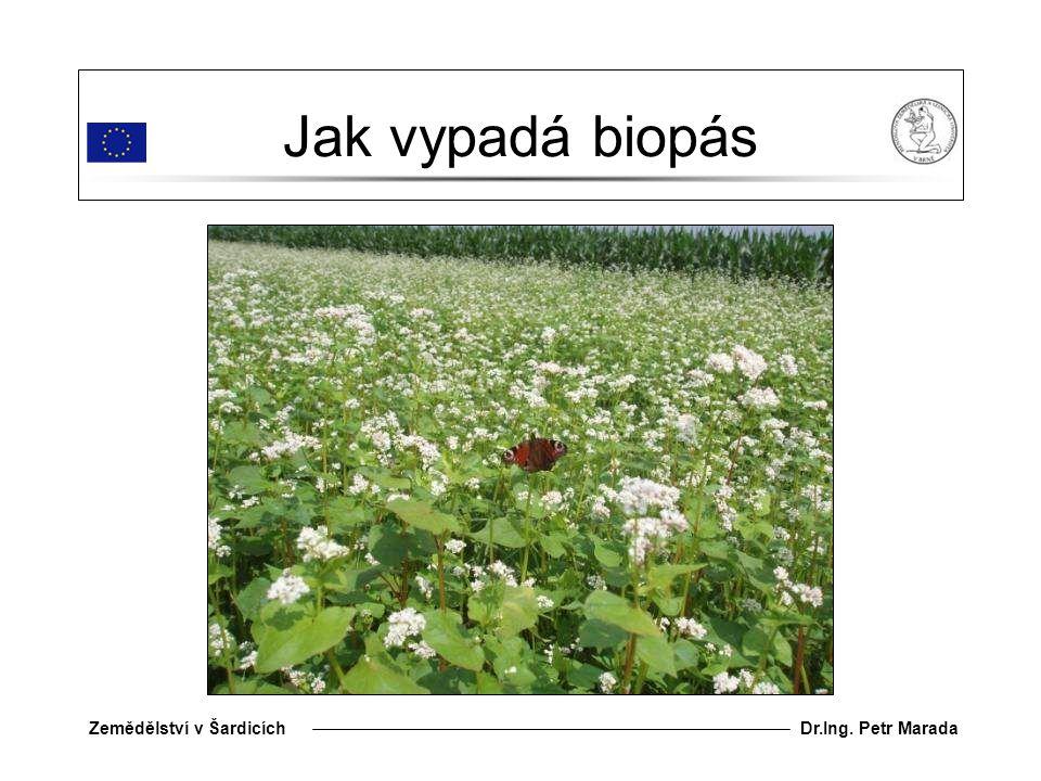Dr.Ing. Petr MaradaZemědělství v Šardicích Jak vypadá biopás