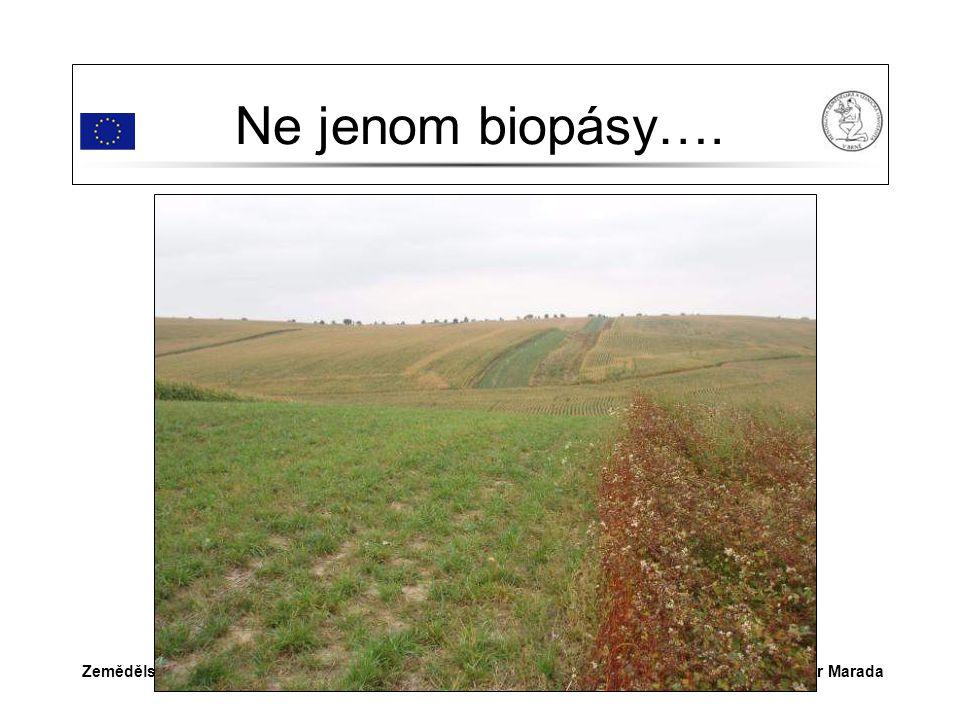 Dr.Ing. Petr MaradaZemědělství v Šardicích Ne jenom biopásy….