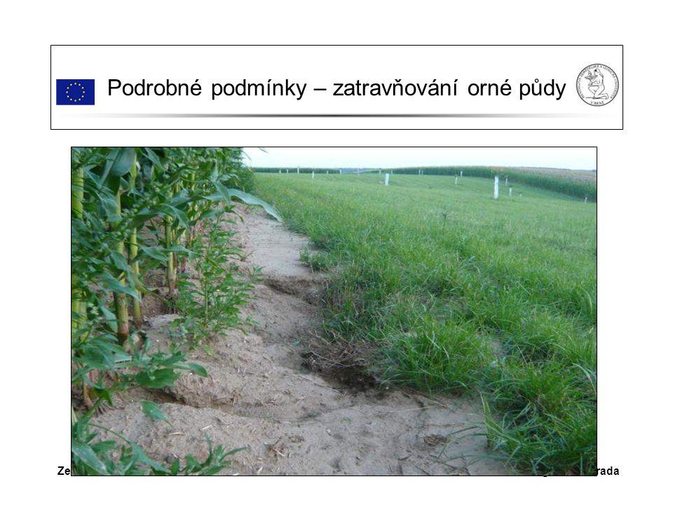 Dr.Ing. Petr MaradaZemědělství v Šardicích Podrobné podmínky – zatravňování orné půdy