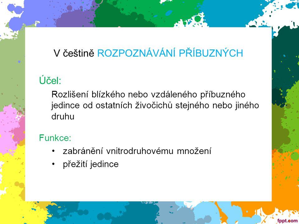 V češtině ROZPOZNÁVÁNÍ PŘÍBUZNÝCH Účel: Rozlišení blízkého nebo vzdáleného příbuzného jedince od ostatních živočichů stejného nebo jiného druhu Funkce