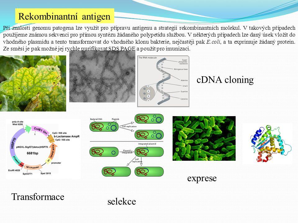 Rekombinantní antigen Při znalosti genomu patogena lze využít pro přípravu antigenu a strategii rekombinantních molekul. V takových případech použijem