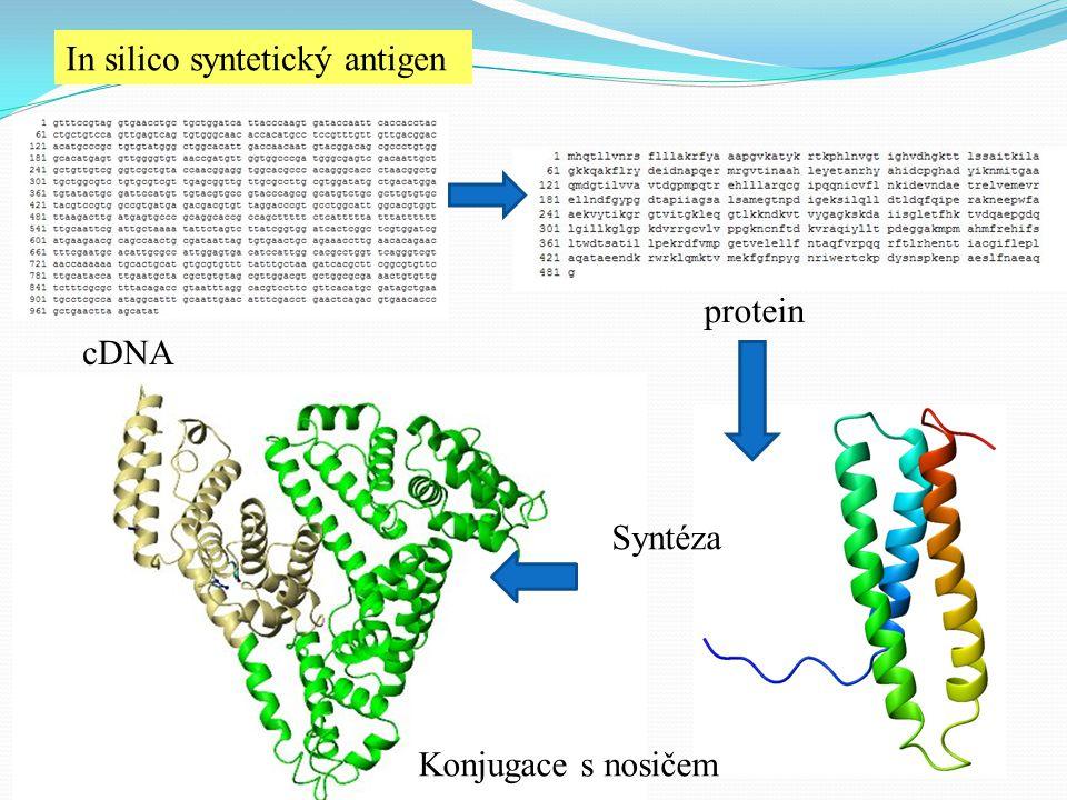 In silico syntetický antigen cDNA protein Syntéza Konjugace s nosičem