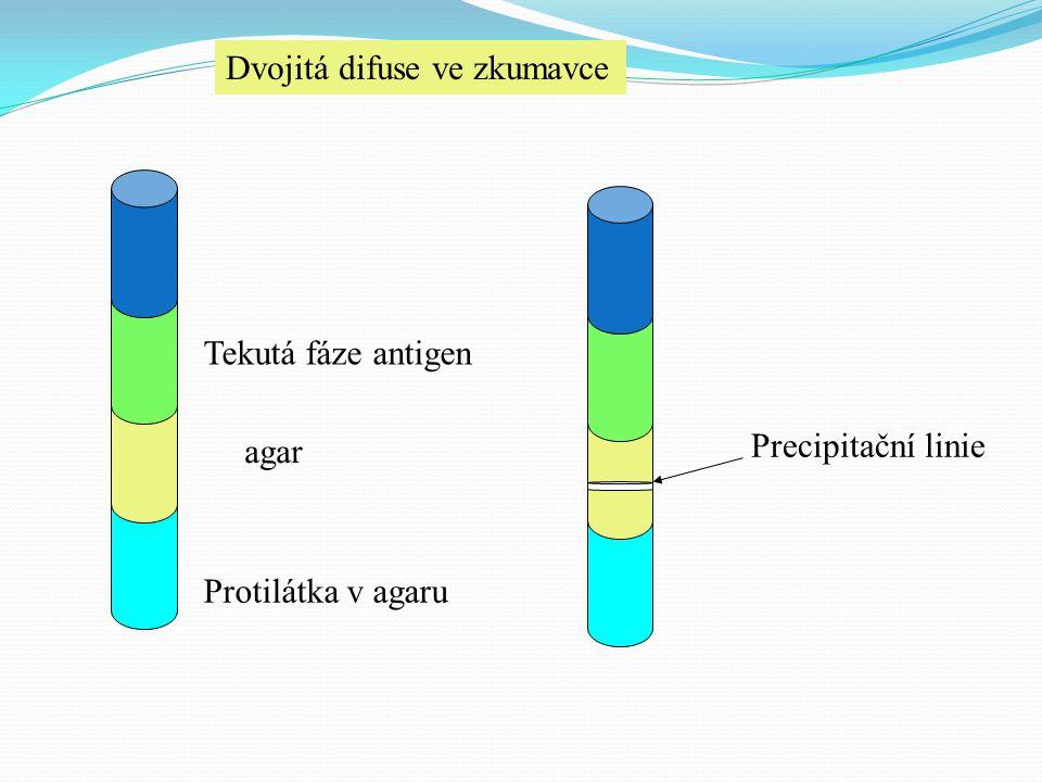 Dvojitá difuse ve zkumavce Protilátka v agaru agar Tekutá fáze antigen Precipitační linie