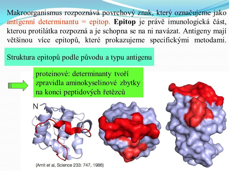 Makroorganismus rozpoznává povrchový znak, který označujeme jako antigenní determinantu = epitop. Epitop je právě imunologická část, kterou protilátka