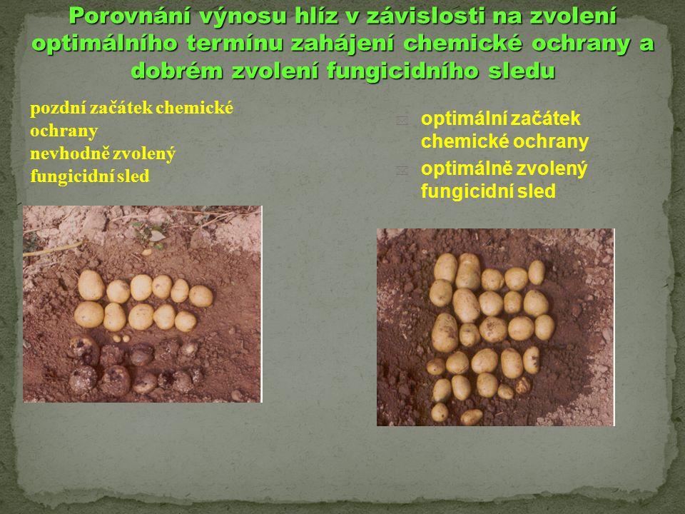 Porovnání výnosu hlíz v závislosti na zvolení optimálního termínu zahájení chemické ochrany a dobrém zvolení fungicidního sledu  optimální začátek ch