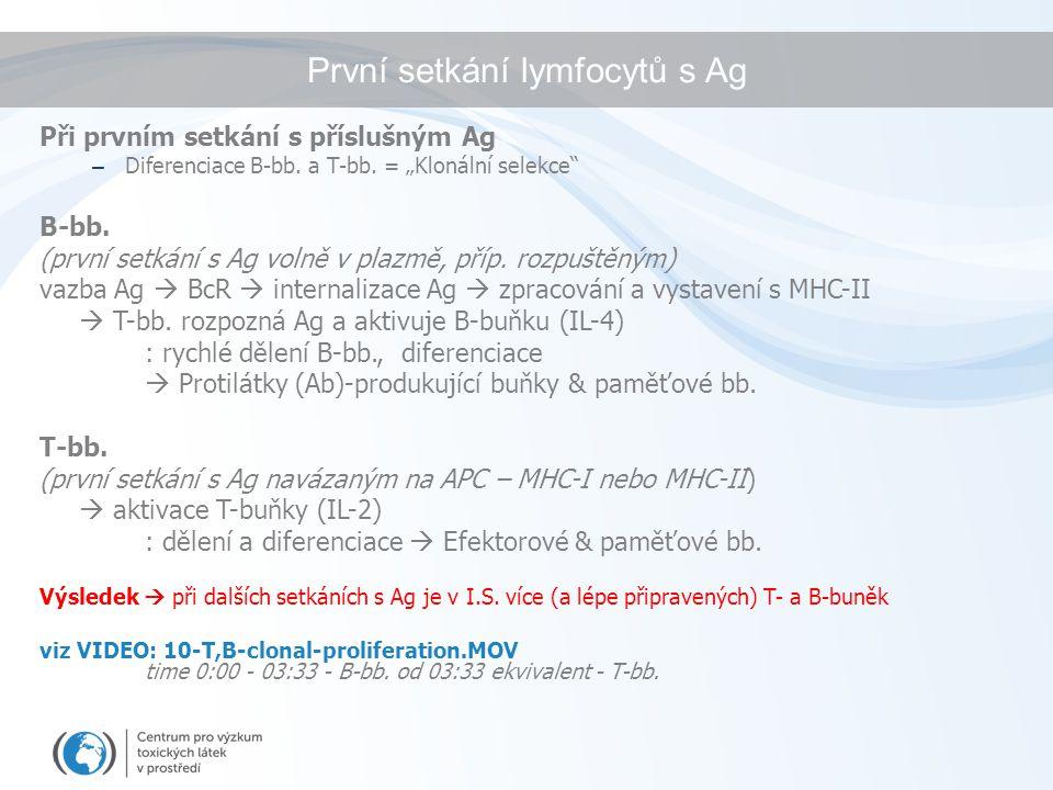 """První setkání lymfocytů s Ag Při prvním setkání s příslušným Ag – Diferenciace B-bb. a T-bb. = """"Klonální selekce"""" B-bb. (první setkání s Ag volně v pl"""