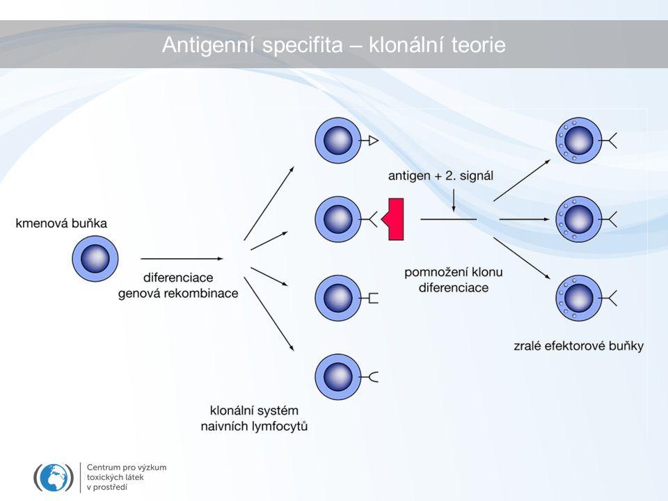 Antigenní specifita – klonální teorie
