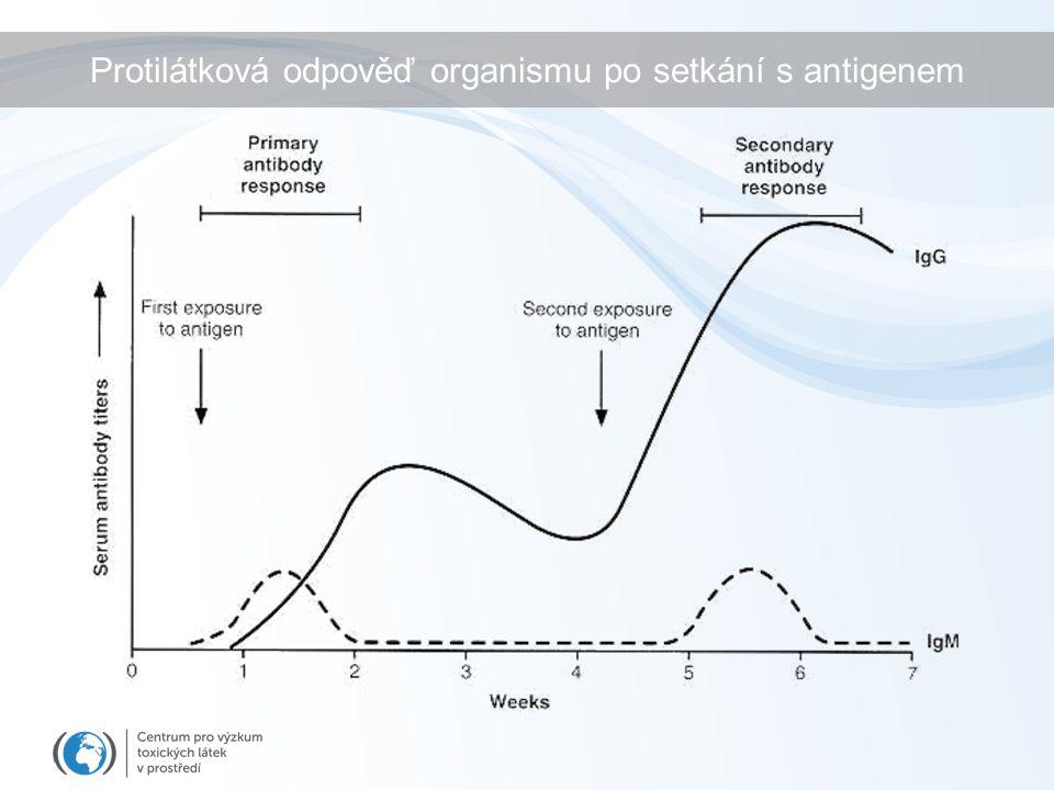 Protilátková odpověď organismu po setkání s antigenem