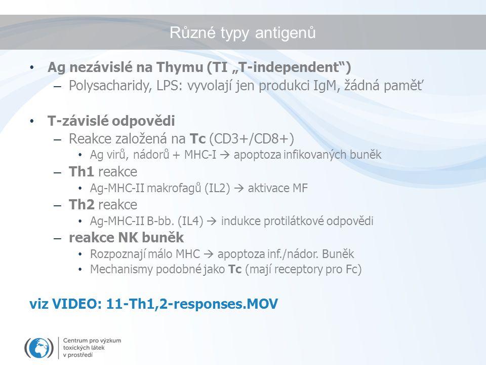 """Různé typy antigenů Ag nezávislé na Thymu (TI """"T-independent"""") – Polysacharidy, LPS: vyvolají jen produkci IgM, žádná paměť T-závislé odpovědi – Reakc"""