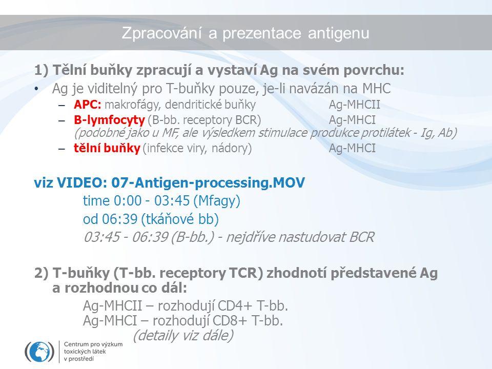 Zpracování a prezentace antigenu 1) Tělní buňky zpracují a vystaví Ag na svém povrchu: Ag je viditelný pro T-buňky pouze, je-li navázán na MHC – APC: