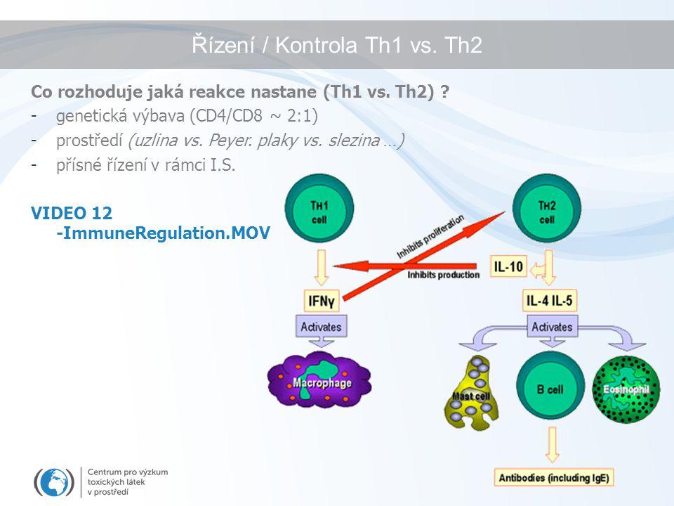 Řízení / Kontrola Th1 vs. Th2 Co rozhoduje jaká reakce nastane (Th1 vs. Th2) ? -genetická výbava (CD4/CD8 ~ 2:1) -prostředí (uzlina vs. Peyer. plaky v