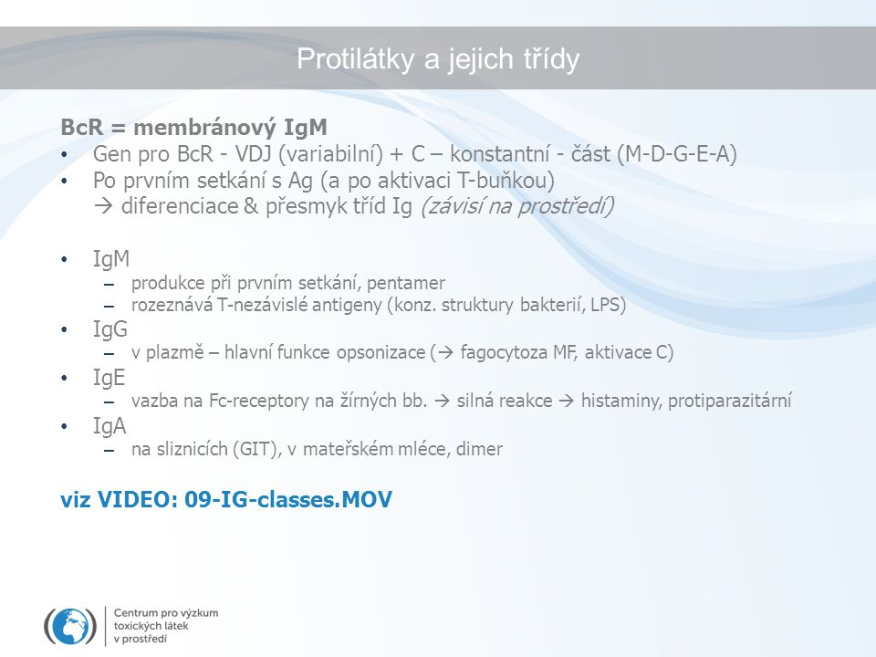 Protilátky a jejich třídy BcR = membránový IgM Gen pro BcR - VDJ (variabilní) + C – konstantní - část (M-D-G-E-A) Po prvním setkání s Ag (a po aktivac