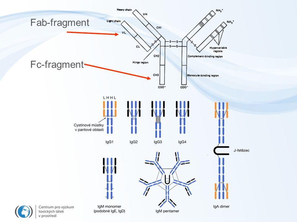 Působení NK buněk
