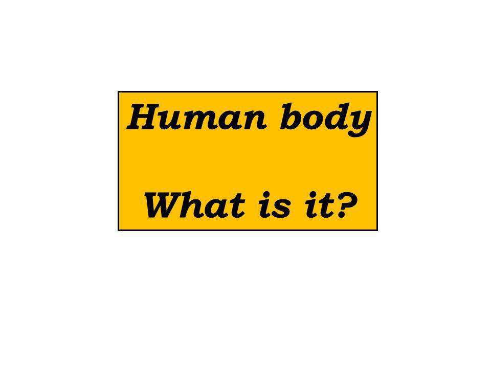 Human body What is it