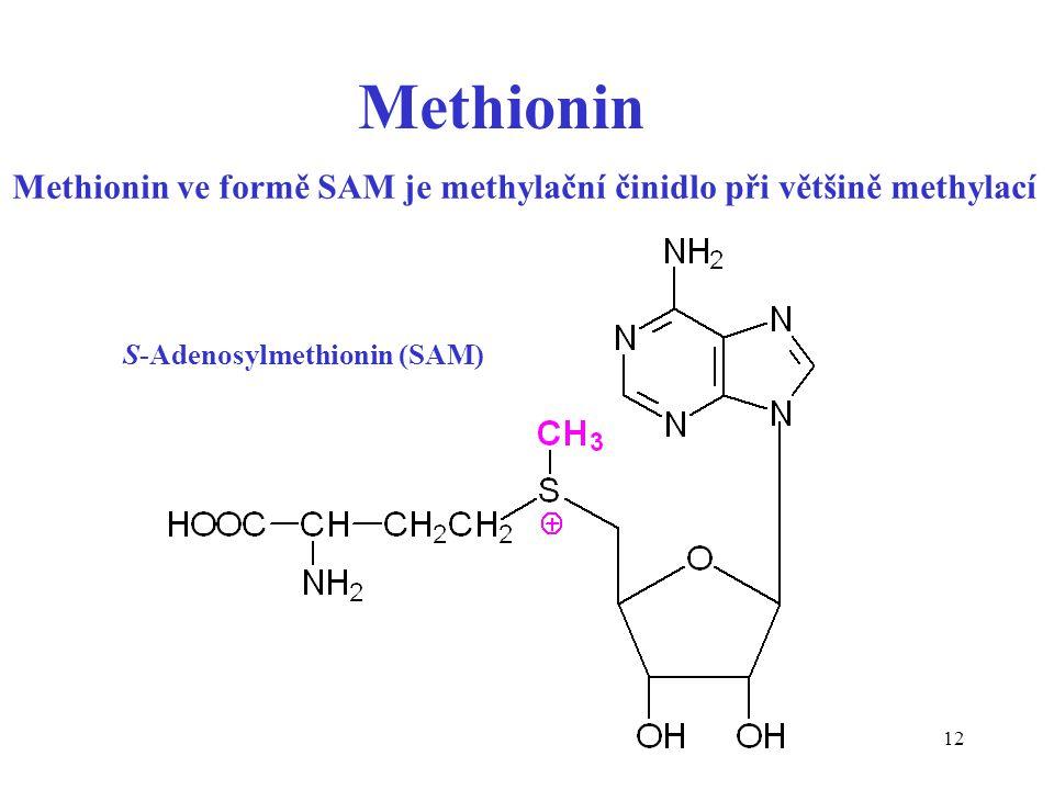 12 Methionin ve formě SAM je methylační činidlo při většině methylací Methionin S-Adenosylmethionin (SAM)