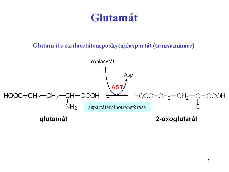 17 Glutamát aspartátaminotransferasa Glutamát s oxalacetátem poskytují aspartát (transaminace)