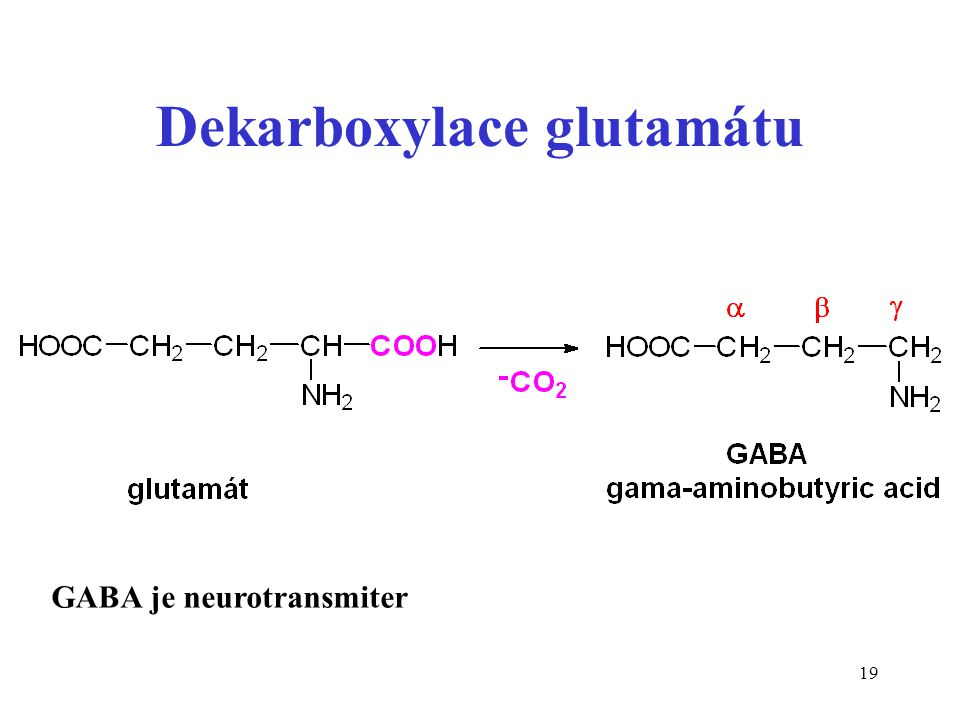 19 Dekarboxylace glutamátu GABA je neurotransmiter
