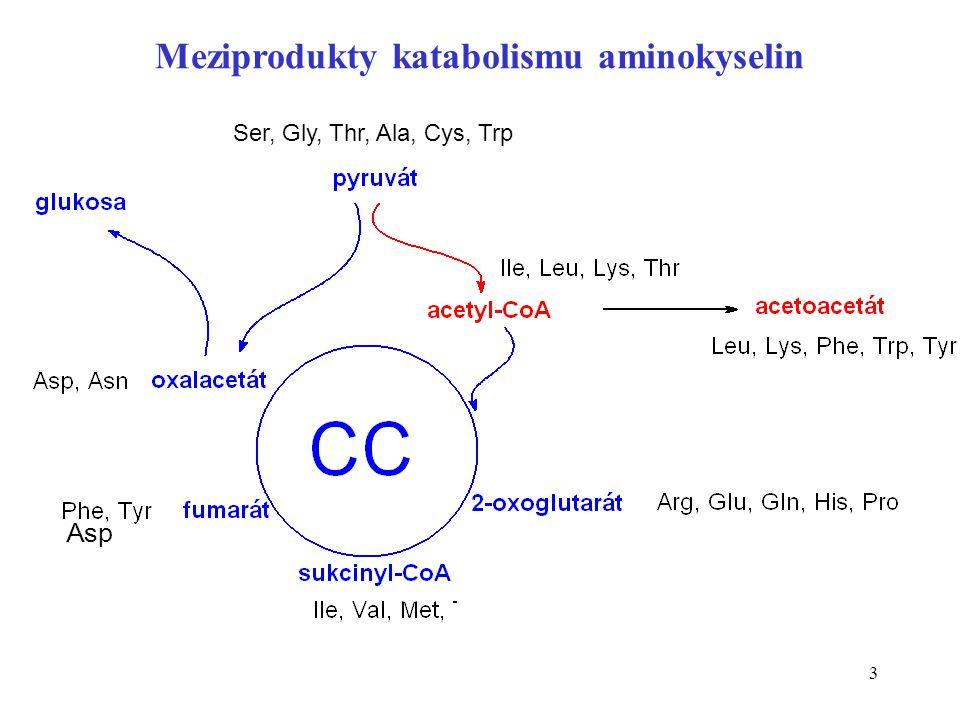 3 Asp Ser, Gly, Thr, Ala, Cys, Trp Meziprodukty katabolismu aminokyselin