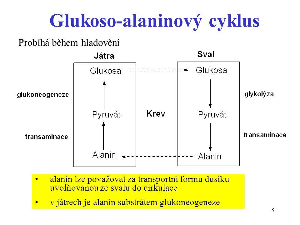 5 Glukoso-alaninový cyklus alanin lze považovat za transportní formu dusíku uvolňovanou ze svalu do cirkulace v játrech je alanin substrátem glukoneog