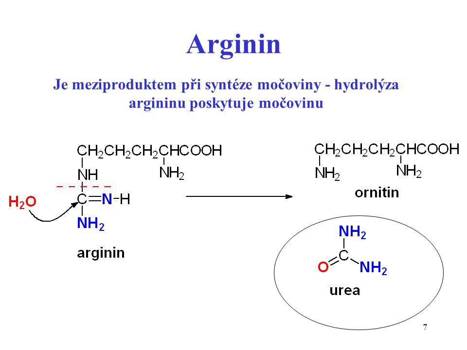 7 Je meziproduktem při syntéze močoviny - hydrolýza argininu poskytuje močovinu Arginin