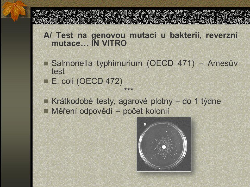 A/ Test na genovou mutaci u bakterií, reverzní mutace… IN VITRO Salmonella typhimurium (OECD 471) – Amesův test E.