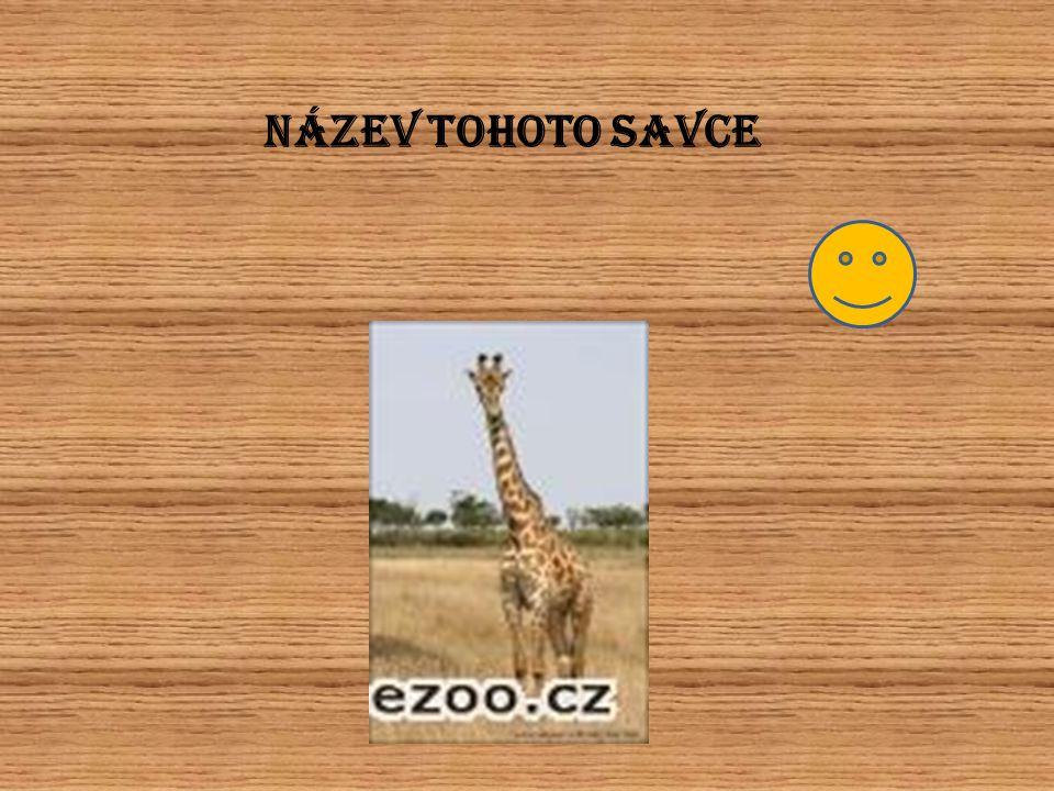 NÁZEV TOHOTO SAVCE