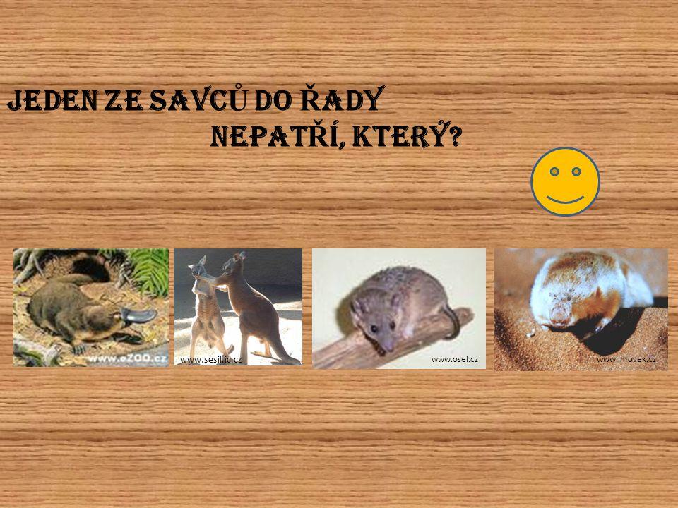 JEDEN ZE SAVC Ů DO Ř ADY NEPAT Ř Í, KTERÝ? www.sesil.ic.cz www.osel.czwww.infovek.cz