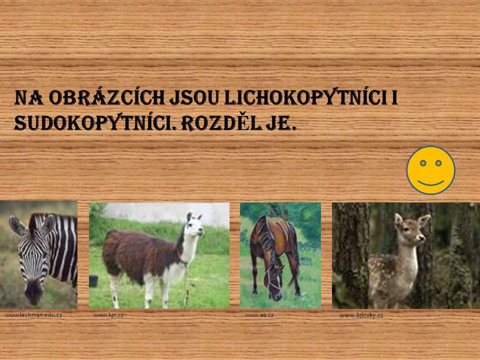NÁZEV TOHOTO SAVCE www.guh.cz