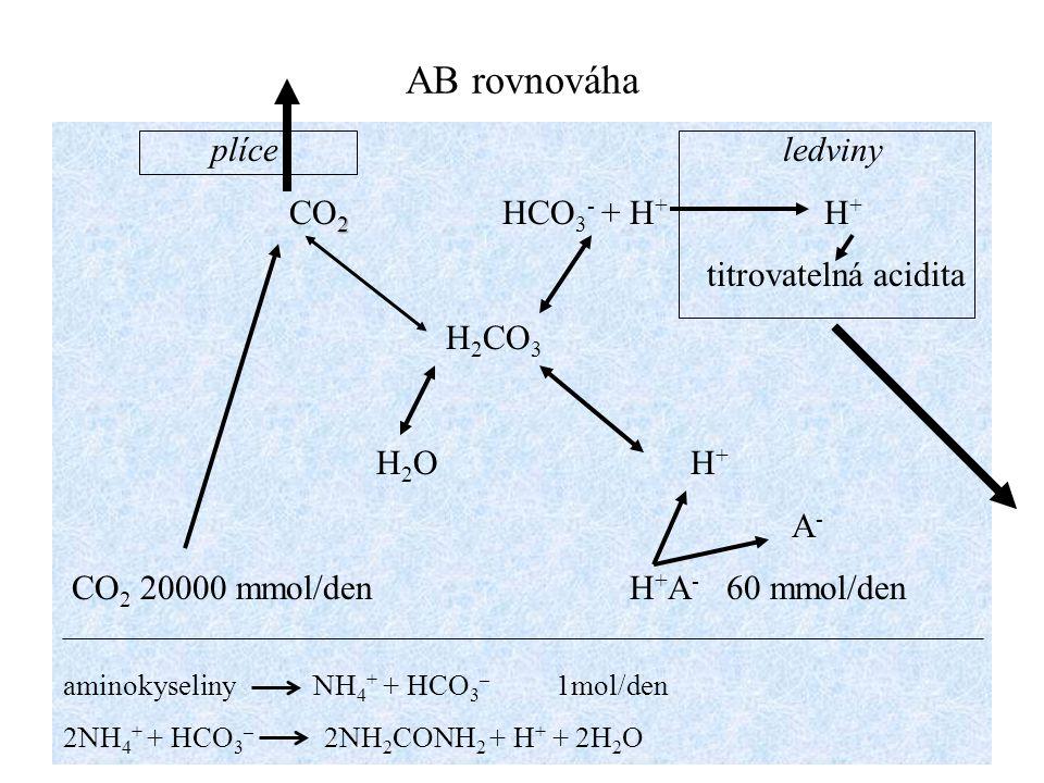 AB rovnováha plíce ledviny 2 CO 2 HCO 3 - + H + H + titrovatelná acidita H 2 CO 3 H 2 O H + A - CO 2 20000 mmol/den H + A - 60 mmol/den aminokyseliny
