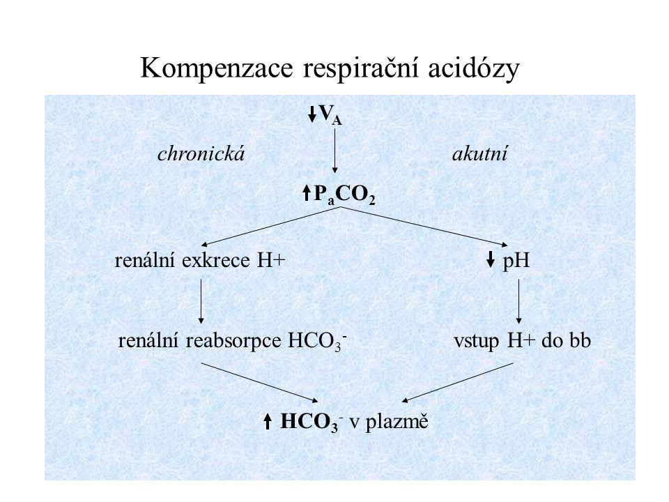 Kompenzace metabolické acidózy koncentrace H + pH HCO 3 - v ECT renální exkrece H + vstup H + do bb renální reabsorpce HCO 3 - centrální chemoreceptory V A HCO 3 - v ECT H 2 CO 3 pH