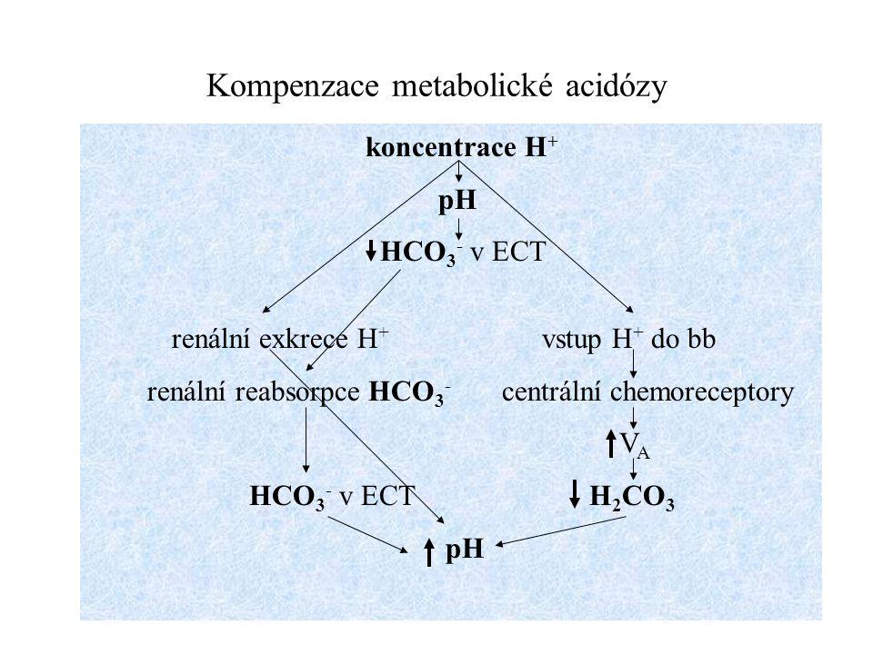 Kompenzace metabolické acidózy koncentrace H + pH HCO 3 - v ECT renální exkrece H + vstup H + do bb renální reabsorpce HCO 3 - centrální chemoreceptor