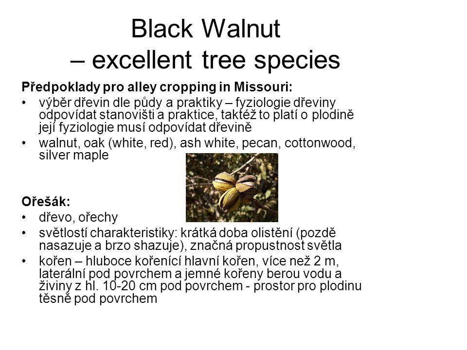 Black Walnut – excellent tree species Předpoklady pro alley cropping in Missouri: výběr dřevin dle půdy a praktiky – fyziologie dřeviny odpovídat stan