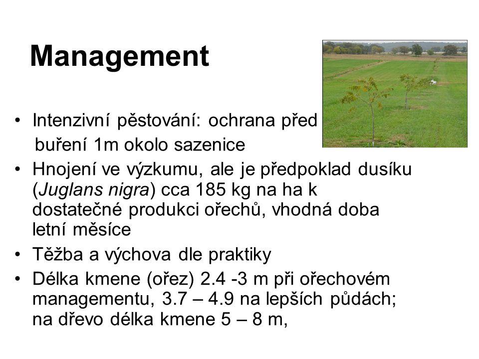 Management Intenzivní pěstování: ochrana před buření 1m okolo sazenice Hnojení ve výzkumu, ale je předpoklad dusíku (Juglans nigra) cca 185 kg na ha k