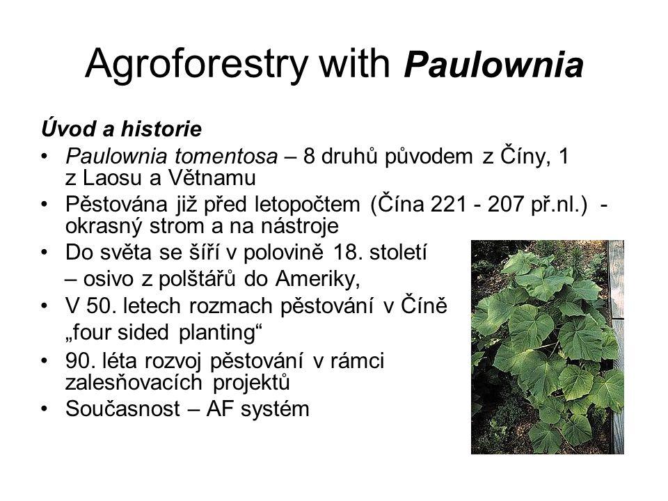 Agroforestry with Paulownia Úvod a historie Paulownia tomentosa – 8 druhů původem z Číny, 1 z Laosu a Větnamu Pěstována již před letopočtem (Čína 221