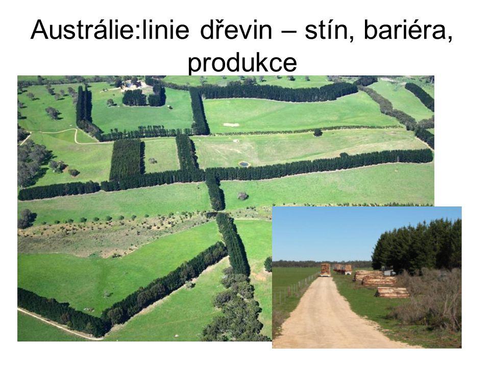 Austrálie:linie dřevin – stín, bariéra, produkce