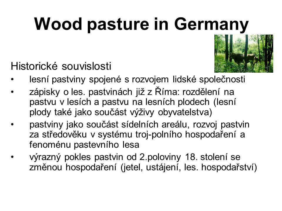 Wood pasture in Germany Historické souvislosti lesní pastviny spojené s rozvojem lidské společnosti zápisky o les. pastvinách již z Říma: rozdělení na