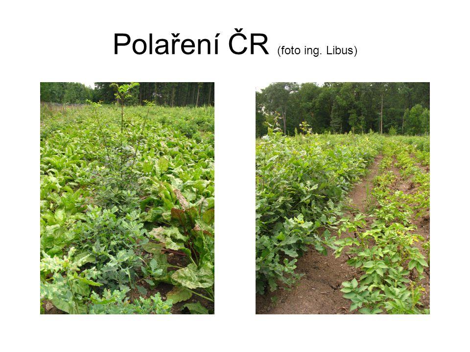 Polaření ČR (foto ing. Libus)