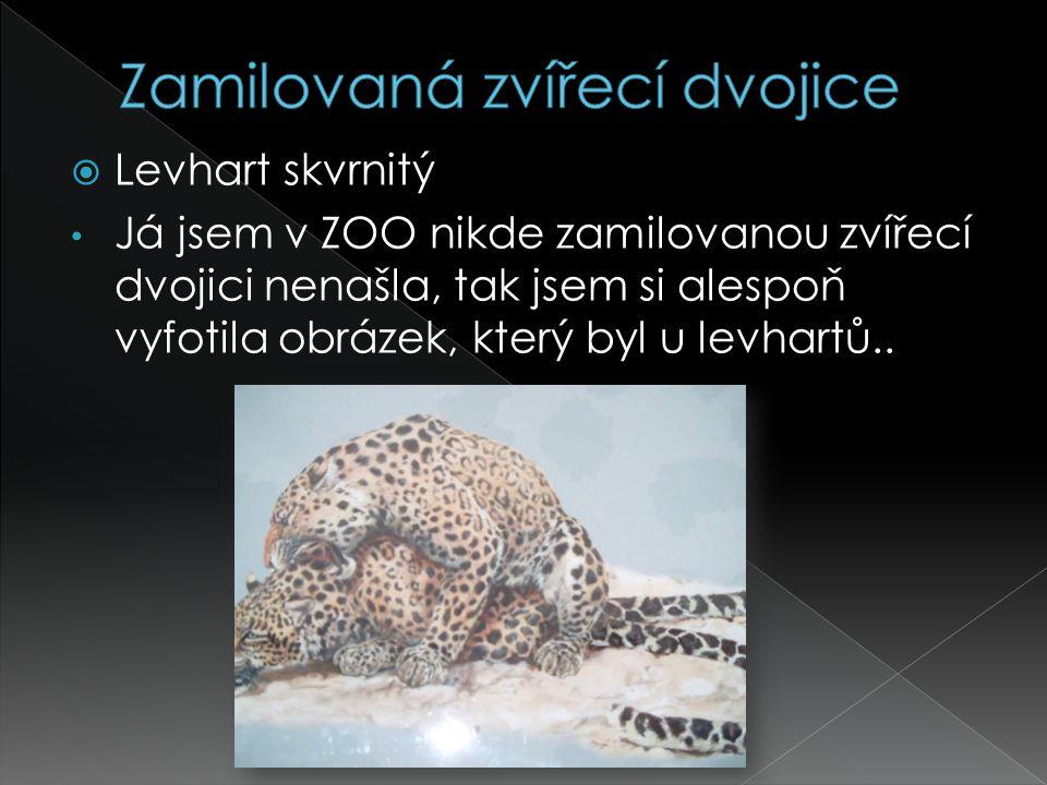  Levhart skvrnitý Já jsem v ZOO nikde zamilovanou zvířecí dvojici nenašla, tak jsem si alespoň vyfotila obrázek, který byl u levhartů..
