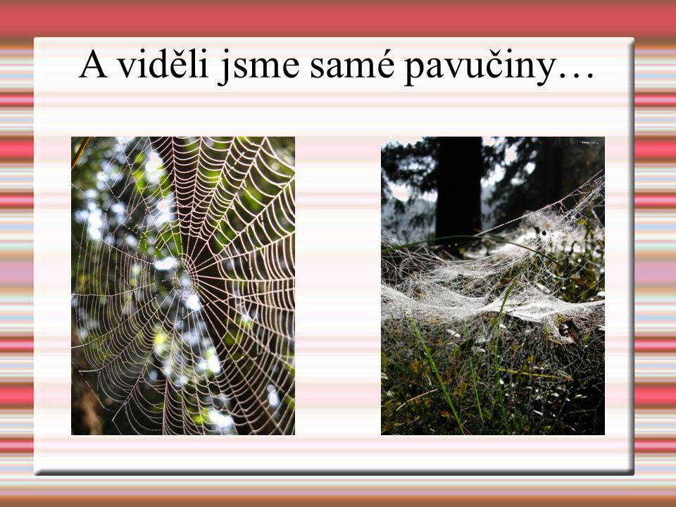 A viděli jsme samé pavučiny…