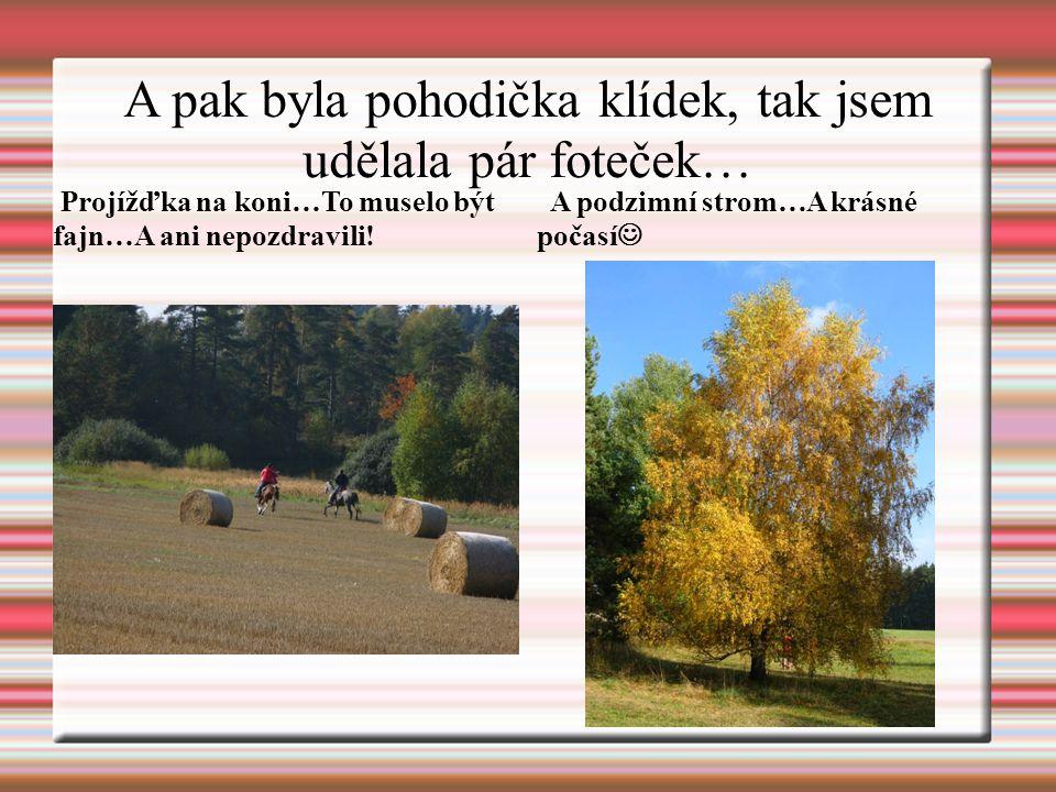 A pak byla pohodička klídek, tak jsem udělala pár foteček… Projížďka na koni…To muselo být fajn…A ani nepozdravili! A podzimní strom…A krásné počasí