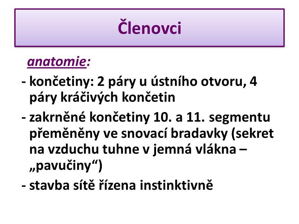 Členovci anatomie: - končetiny: 2 páry u ústního otvoru, 4 páry kráčivých končetin - zakrněné končetiny 10.
