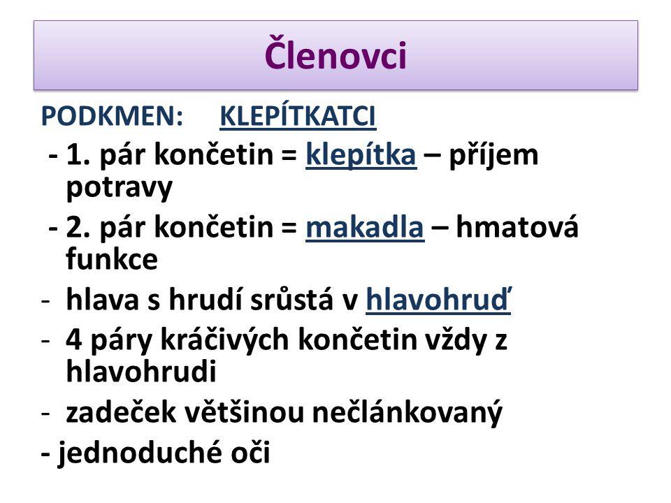 Členovci PODKMEN: KLEPÍTKATCI - 1. pár končetin = klepítka – příjem potravy - 2. pár končetin = makadla – hmatová funkce -hlava s hrudí srůstá v hlavo
