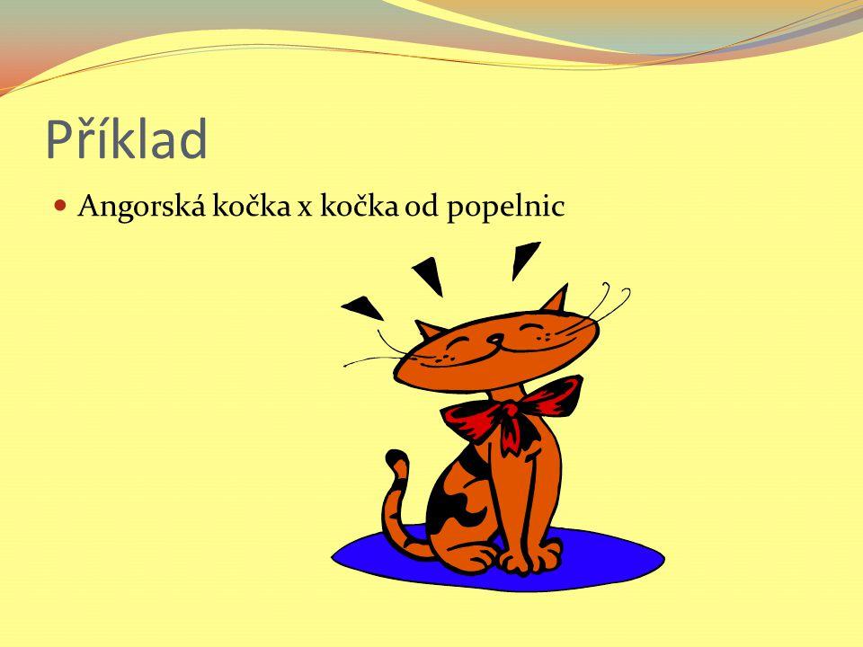 Příklad Angorská kočka x kočka od popelnic