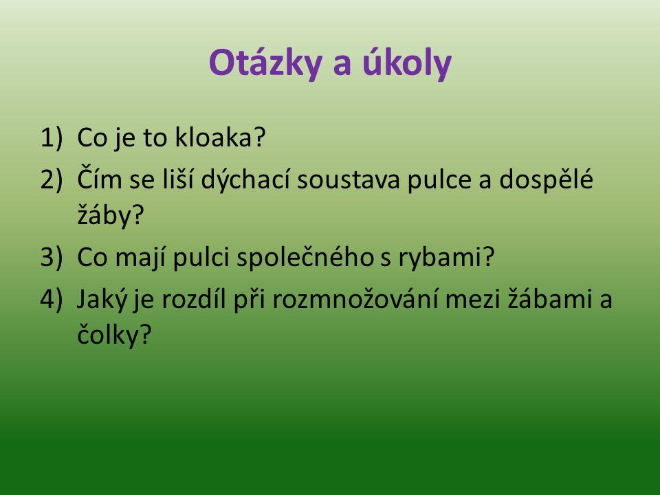 Otázky a úkoly 1)Co je to kloaka.2)Čím se liší dýchací soustava pulce a dospělé žáby.