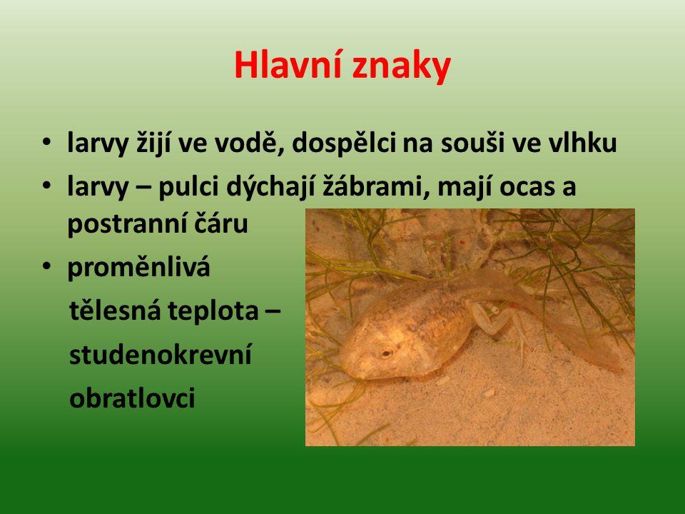 Hlavní znaky larvy žijí ve vodě, dospělci na souši ve vlhku larvy – pulci dýchají žábrami, mají ocas a postranní čáru proměnlivá tělesná teplota – stu