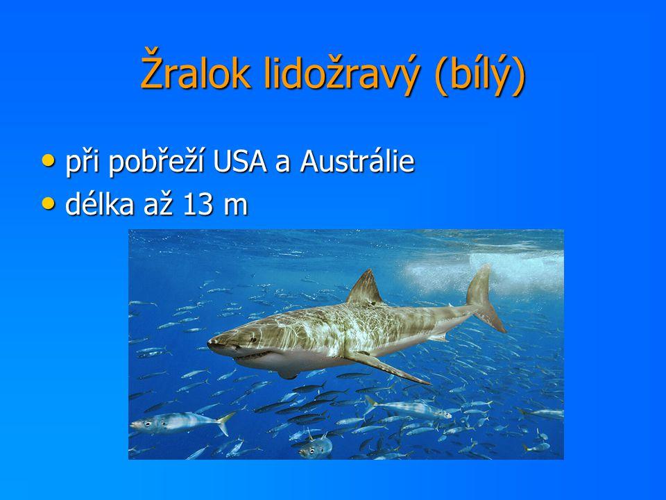 Žralok lidožravý (bílý) při pobřeží USA a Austrálie při pobřeží USA a Austrálie délka až 13 m délka až 13 m