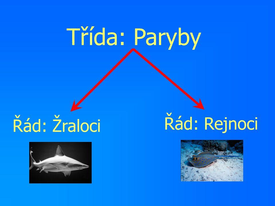 Třída: Paryby Řád: Rejnoci Řád: Žraloci