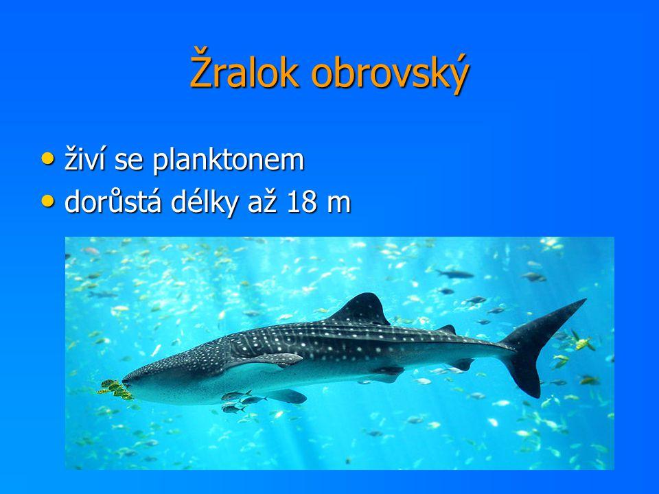 Žralok obrovský živí se planktonem živí se planktonem dorůstá délky až 18 m dorůstá délky až 18 m